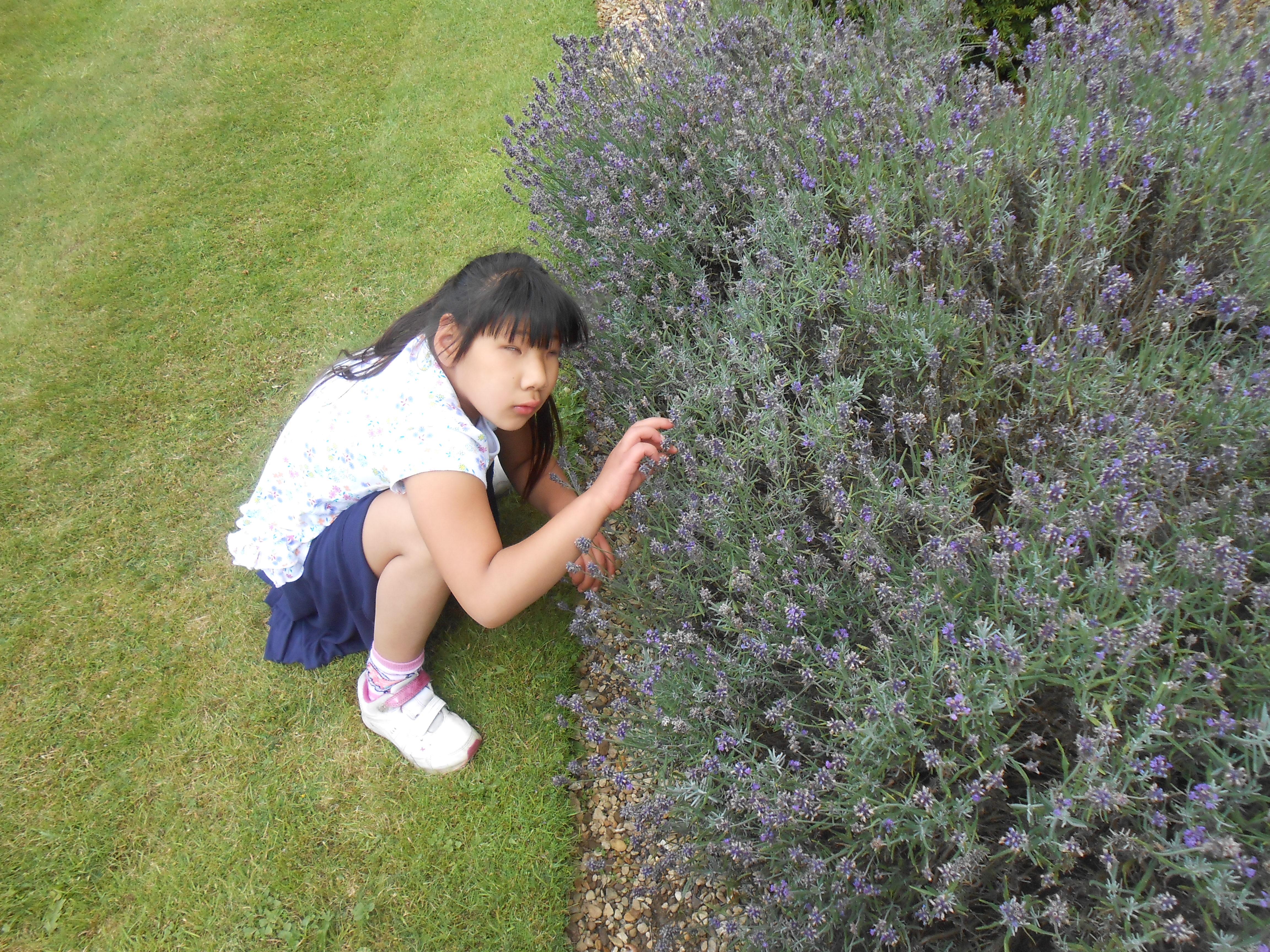 Image shows child feeling foliage